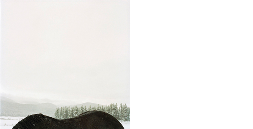 COLLEEN PLUMB  Horseback Mountain, 1999   from Animals are Outside Today  19 x 19 inches  Archival pigment print, edition 10