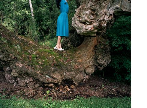 Mushroom Cut, 2005  30 x 40 inches Archival pigment print