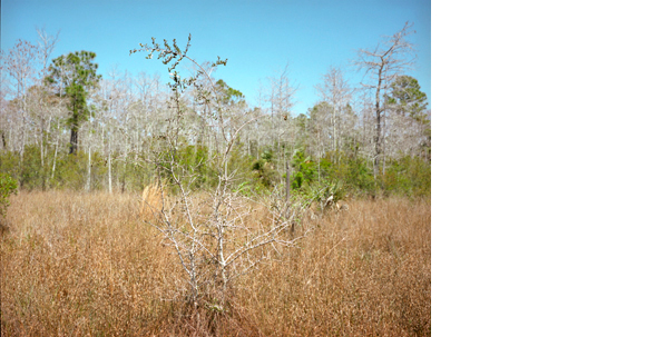 HUMBERTO TORRES  Untitled, (Everglades) 2009   11 x 14 inches  C-print