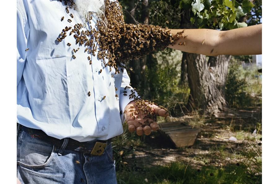 HLynton_Les, Amber, Honeybees.jpg