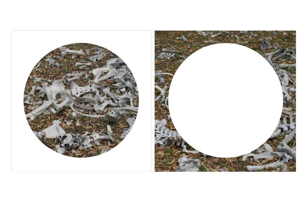 Universus #8 & #7, 2013      Archival Pigmented Print 20 x 20 inches