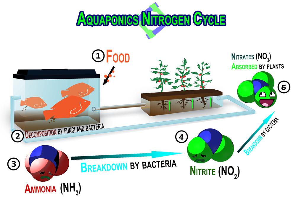 Carverponics Nitrogen Cycle