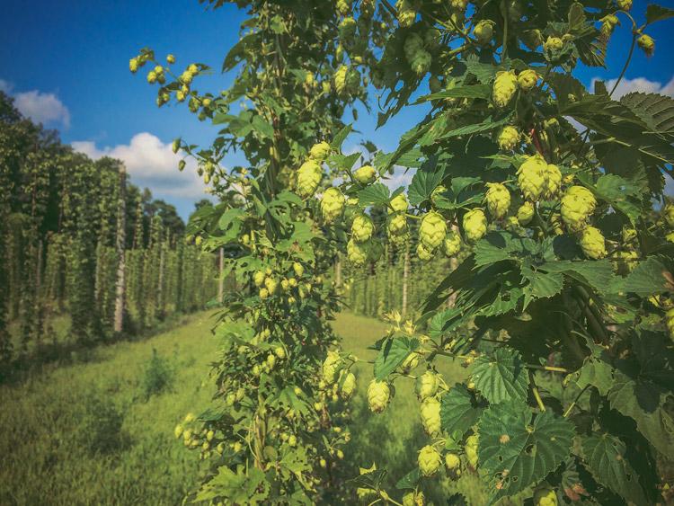 Duggans-Brewery--Parkdale-Toronto-6.jpg