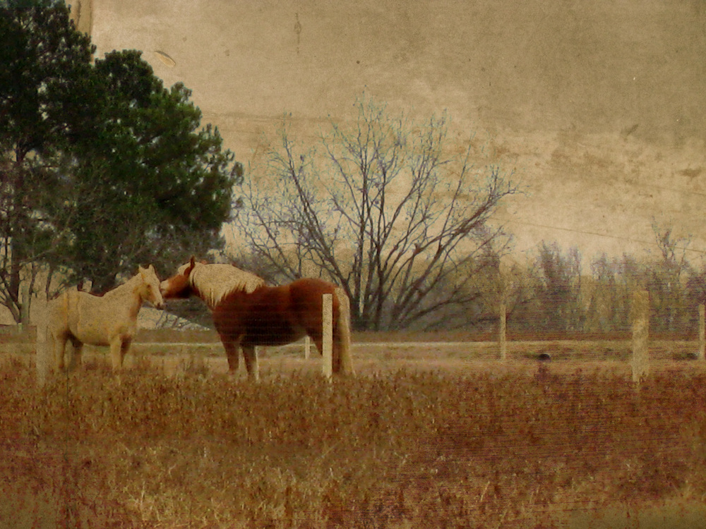 love horses.jpg