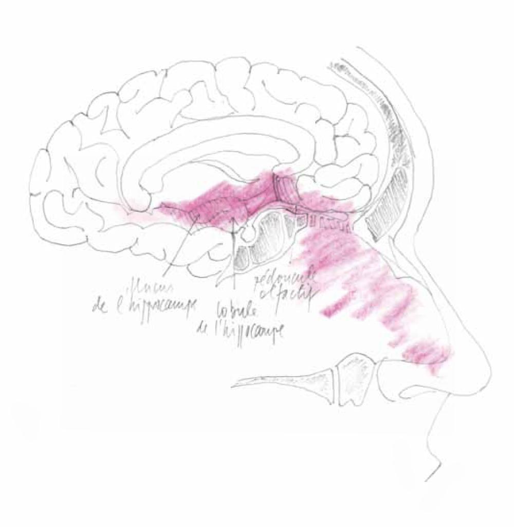 Illustration: Dr Jean-Jacques Morel