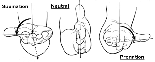 wrist-supination-neutral-pronation.jpg