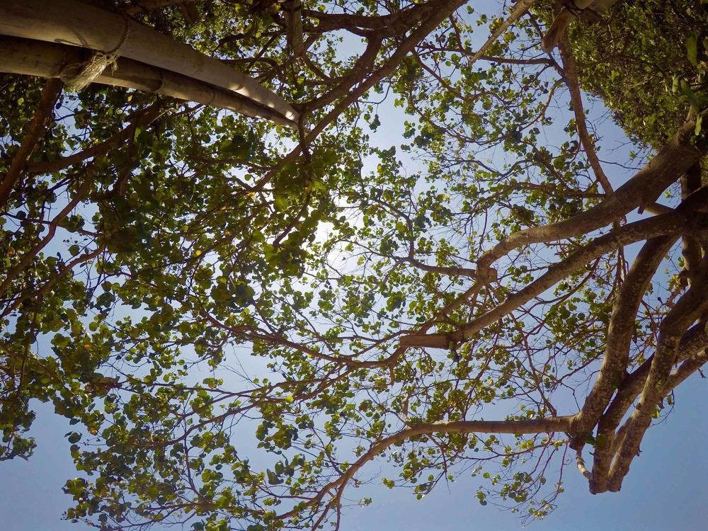 Intermittent shade, intermittent sun. My kind of beach. © 2015 Gail Jessen, A Series of Adventures