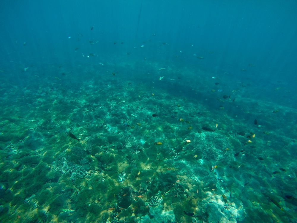 In the moment, I would've sworn that I swam through a thousand yellow fish and they flooded all around my GoPro in extreme closeup. Turns out this is what the photo actually looks like. (c) 2015 Gail Jessen, A Series of Adventures