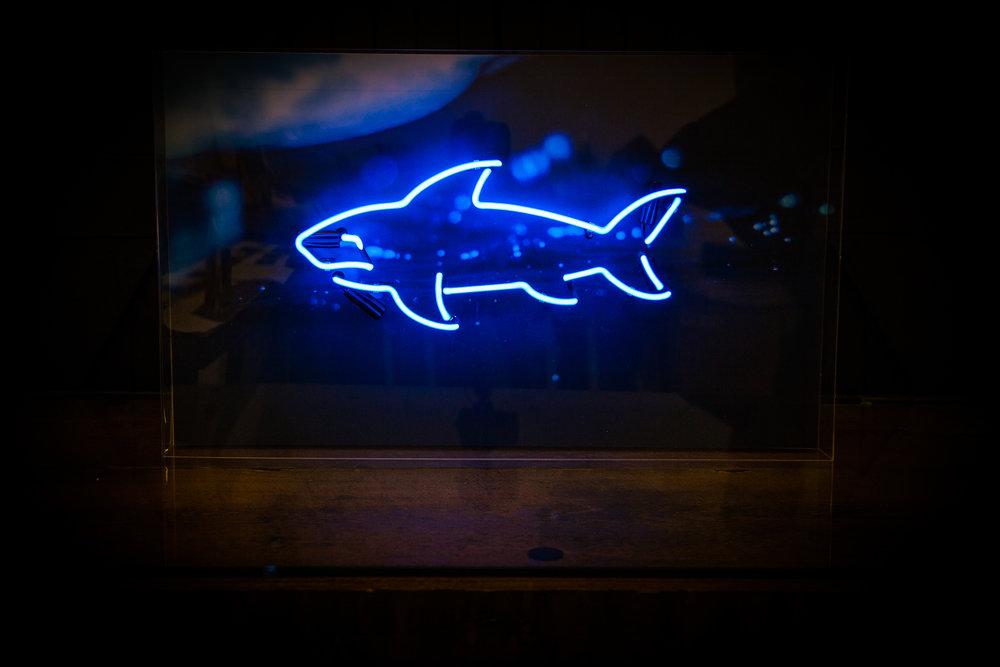 Gallery - Shark 01.jpg