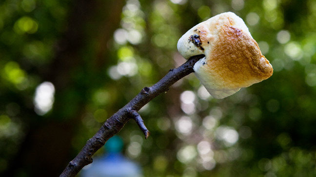 Summer Science: The Perfectly Toasted Marshmallow