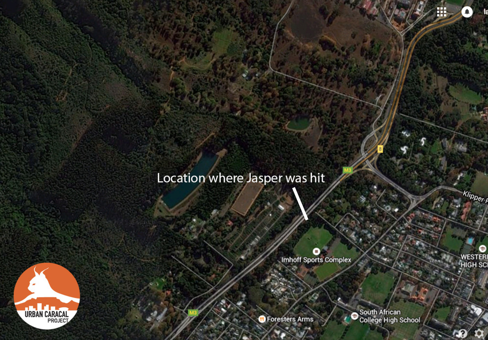 A map showing where we recovered Jasper's body and where he was hit by the car.