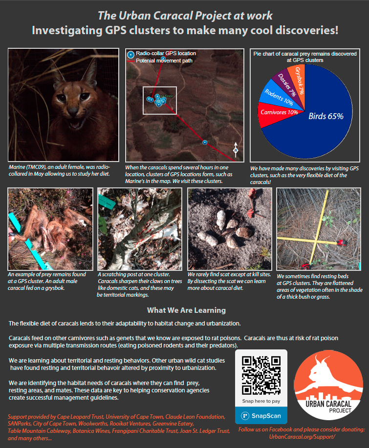 The Urban Caracal Project at work: Investigating GPS clusters to make many cool discoveries! -