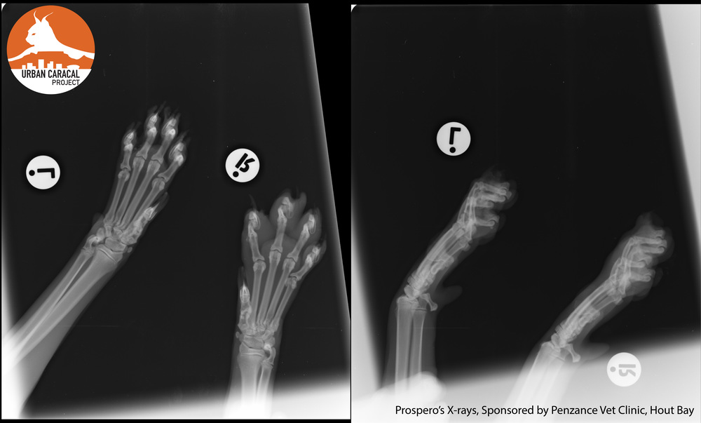 Prospero's X-rays.