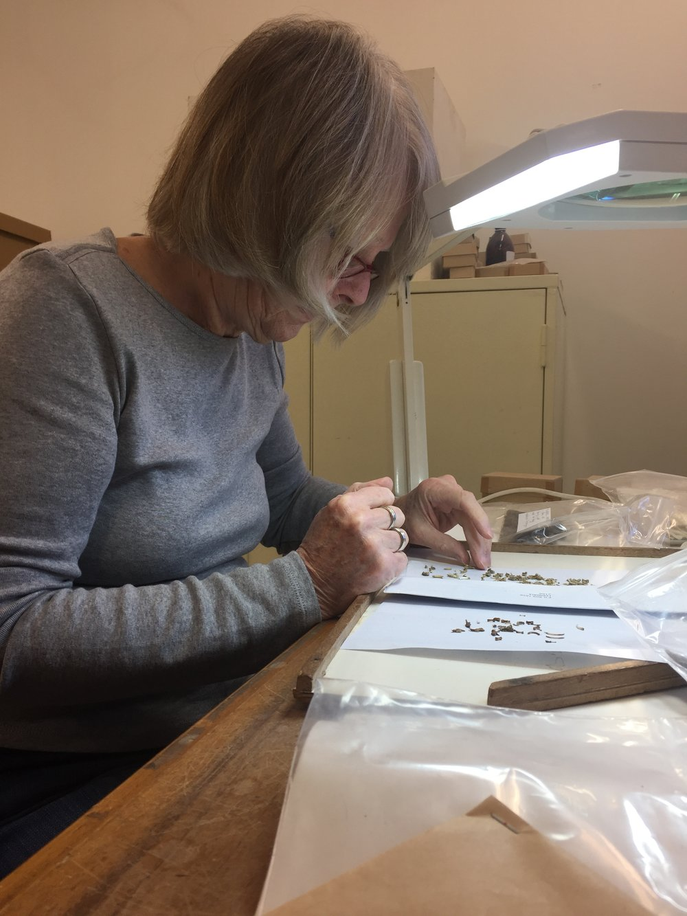 Magaret Avery examines some very small rodent bones and counts the number of individuals between two related samples using left and right-sided bones