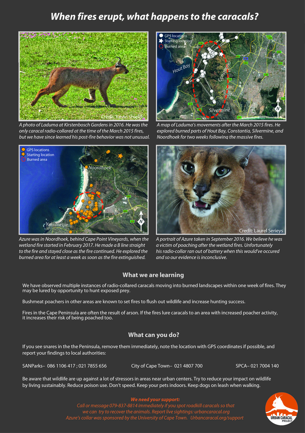 When fires erupt, what happens to the caracals? - September 19, 2017