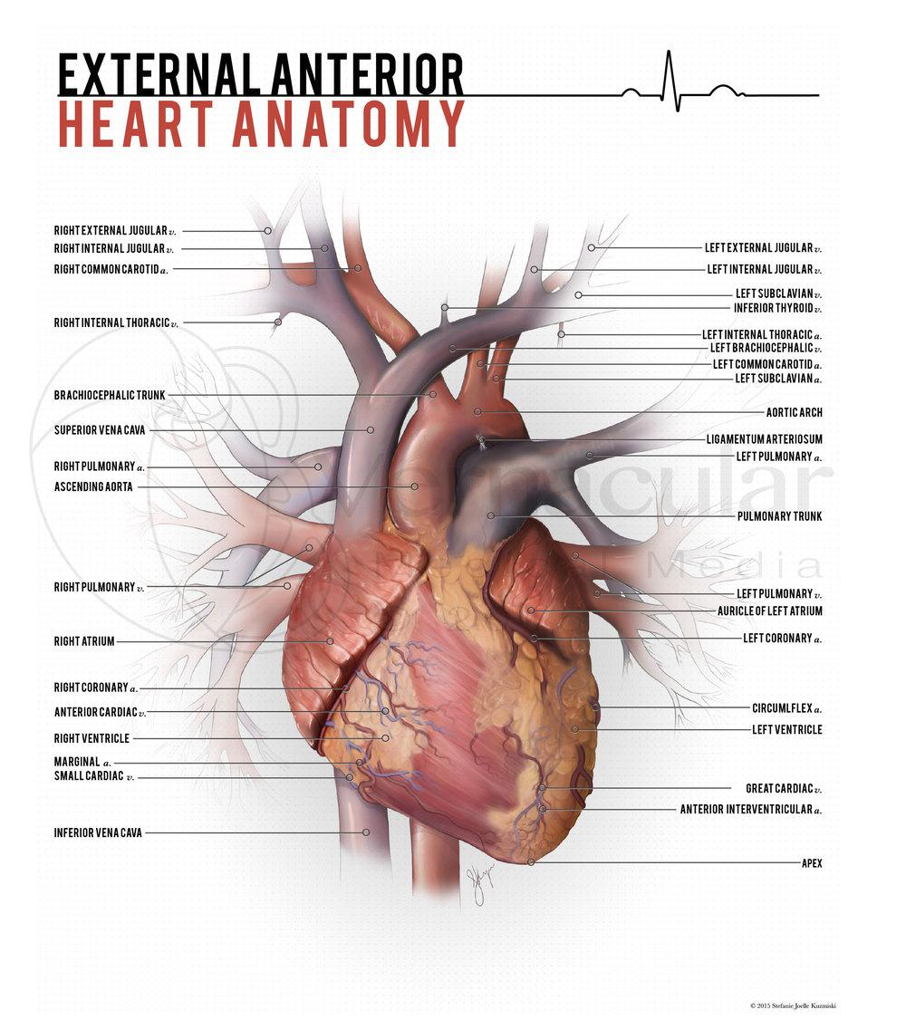 Anatomy — Vernacular Studios