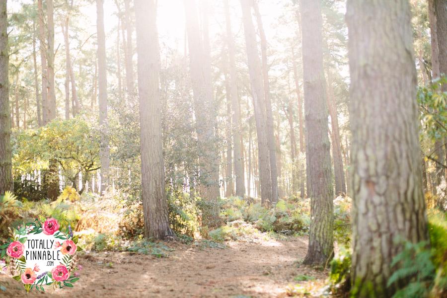 totally pinnable rowney warren woodland autumn