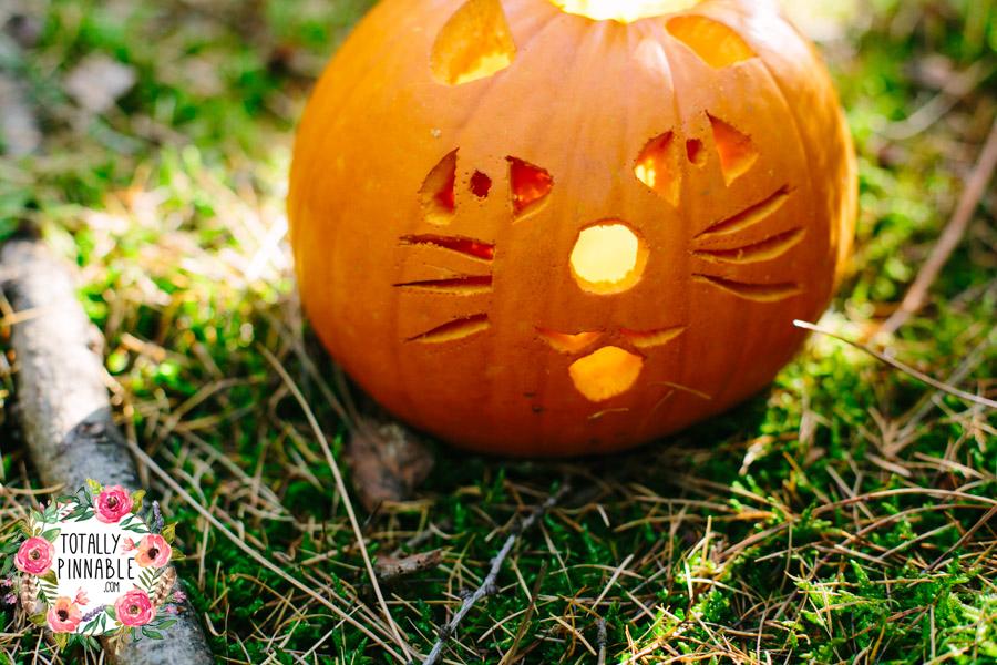 totally pinnable rowney warren woodland autumn cat pumpkin halloween