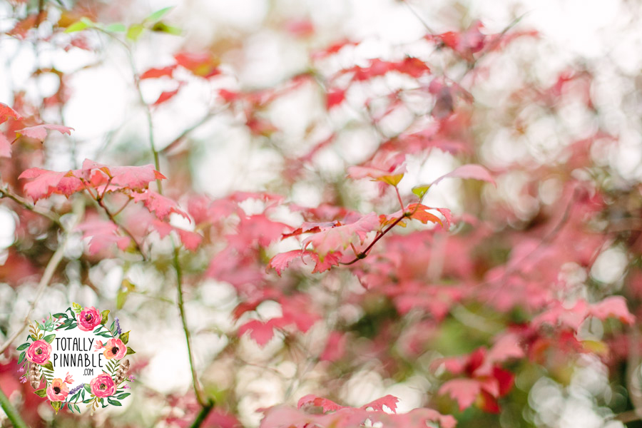 totally pinnable rowney warren woodland autumn beautiful red leaves