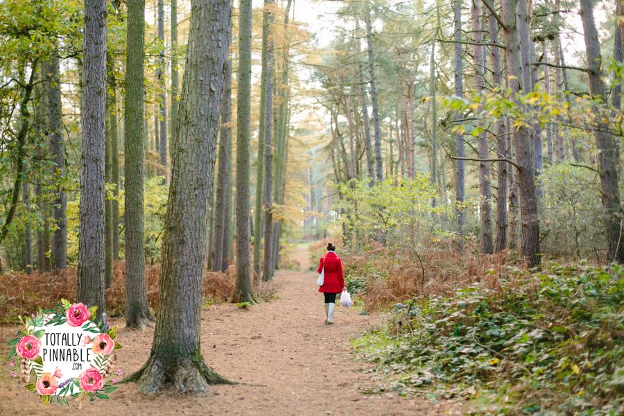 totally pinnable rowney warren woodland autumn heading home