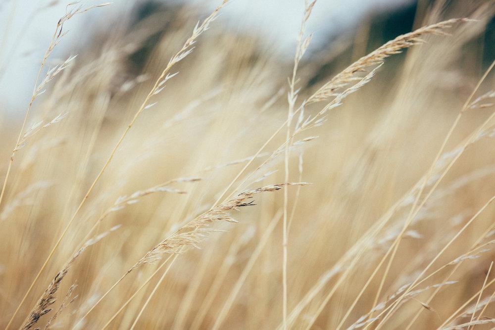 Nature 1.jpg