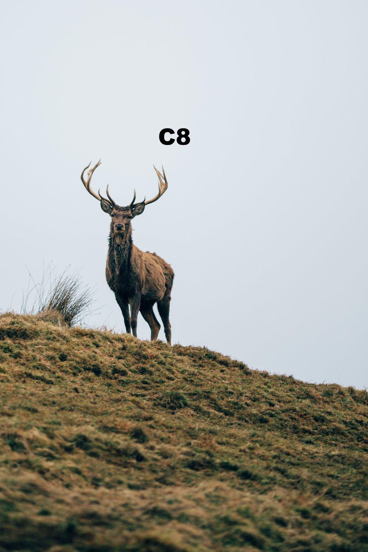 Deer 1 copy.jpg