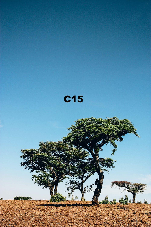 IMG_5632 copy.jpg