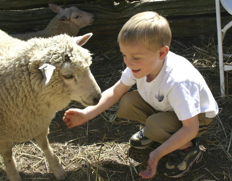 John-with-sheep.jpg