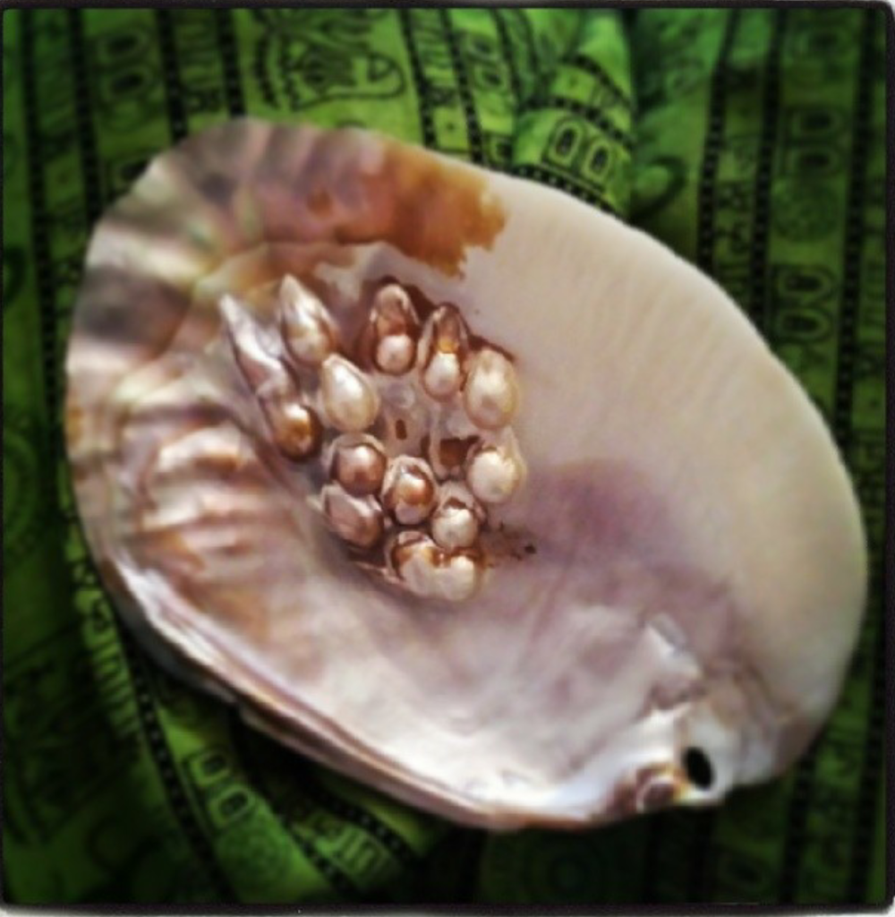 Pearls of nature-photo by Punam.png