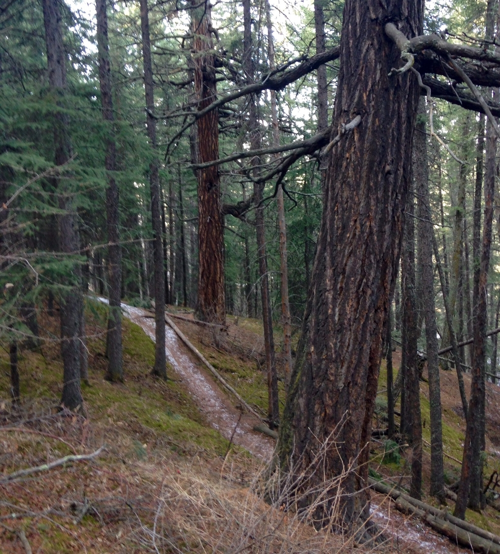 DOUGLAS FIR TREE SANCTUARY | CALGARY, CANADA | PHOTO CREDIT: M. BONNEAU