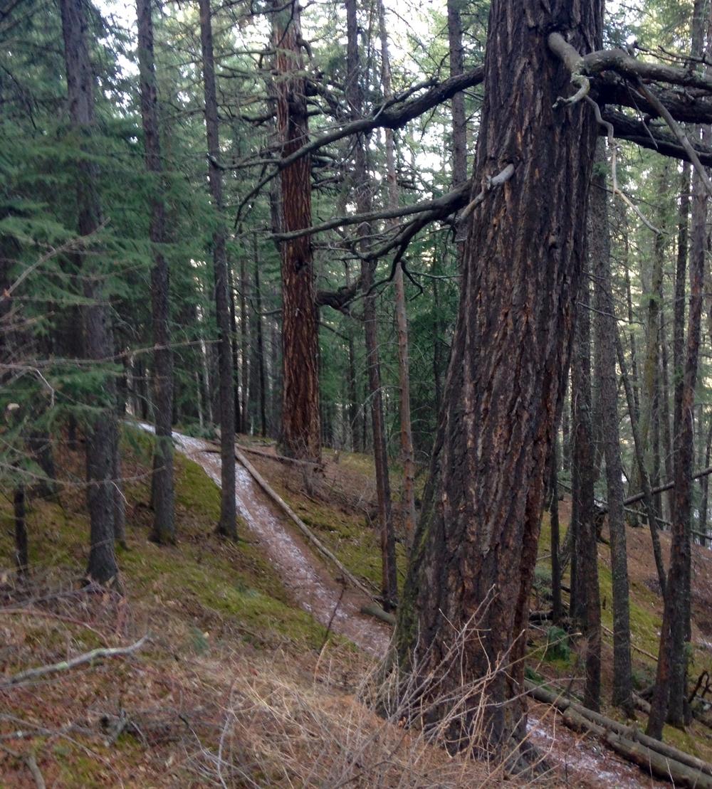 DOUGLAS FIR TREE SANCTUARY | CALGARY, CANADA | PHOTO CREDIT: M. BONNEAU