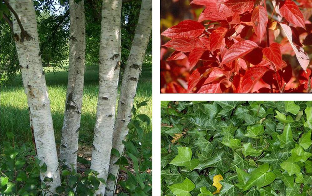 Moscow Plants 1.jpg