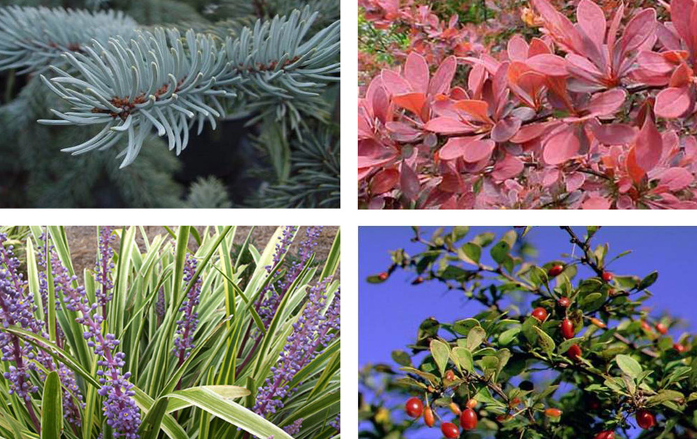 Moscow Plants 2.jpg