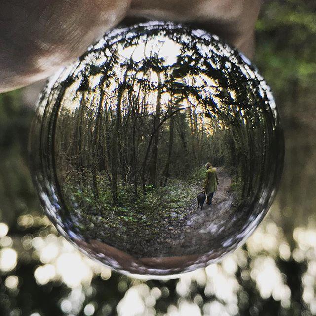 #crystalballphotography #dogwalk #forest