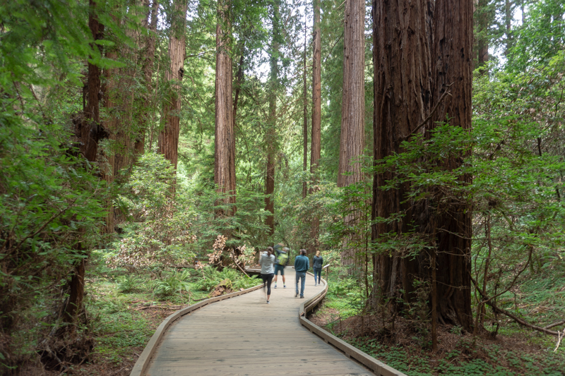 The Main Trail, Muir Woods National Monument