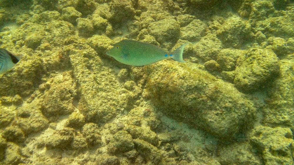 Kauai Snorkeling-1.jpg