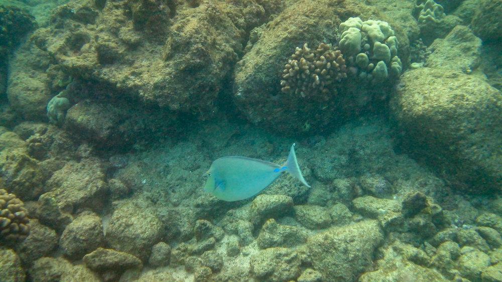 Kauai Snorkeling-3.jpg