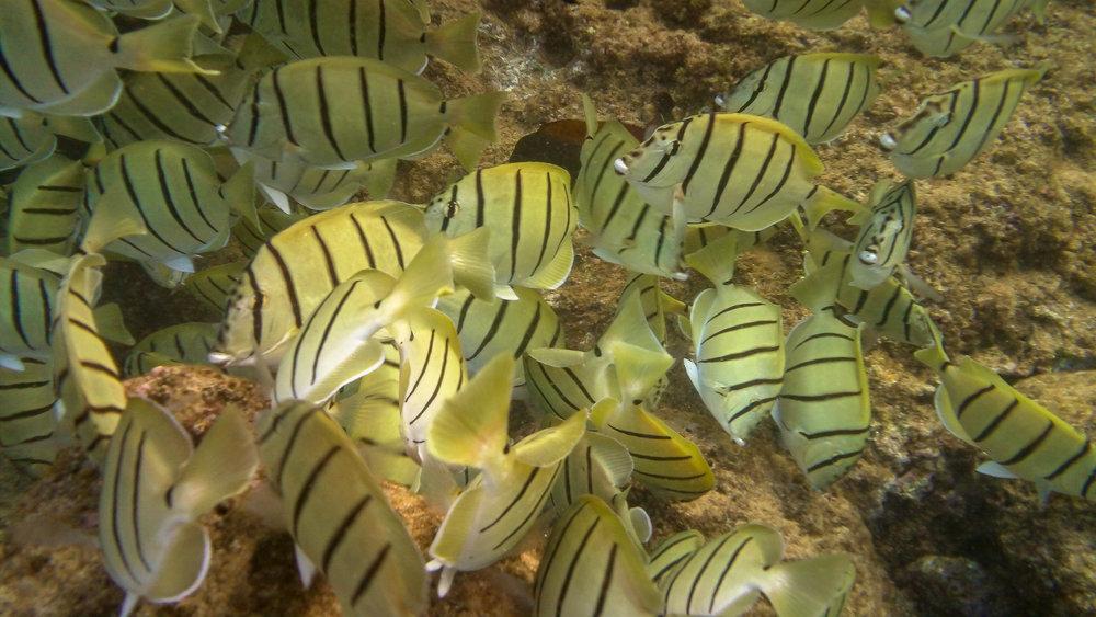 Kauai Snorkeling-4.jpg