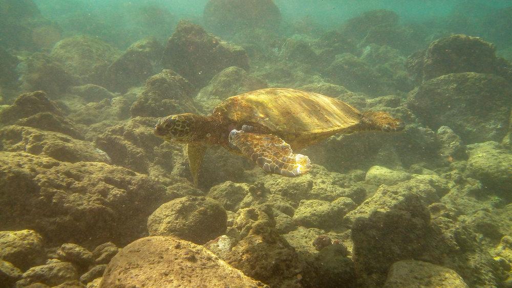 Kauai Snorkeling-11.jpg