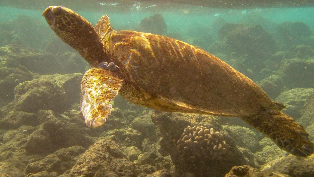 Kauai Snorkeling-12.jpg