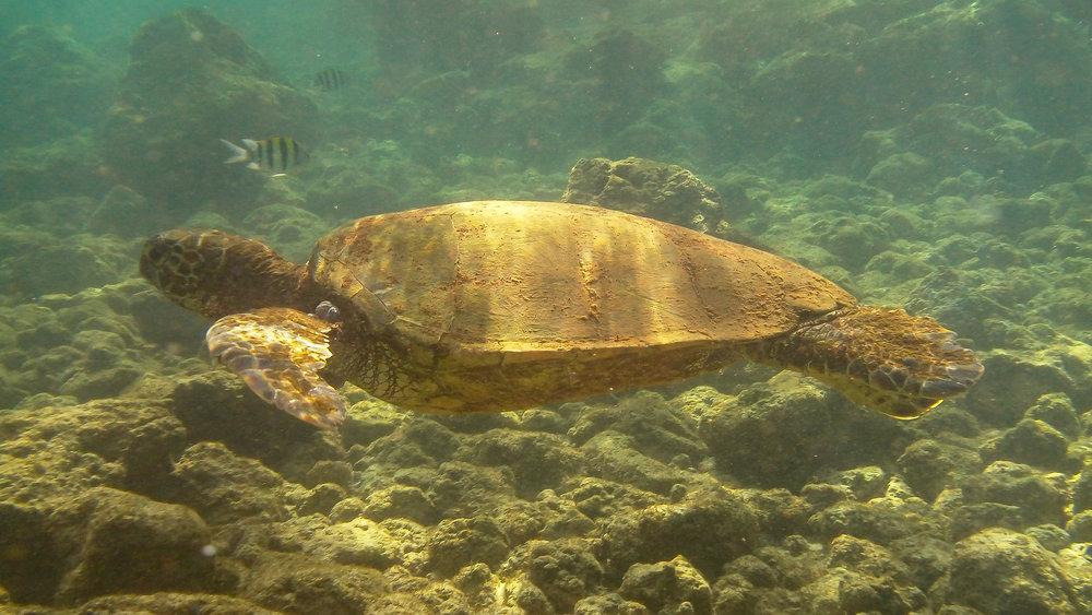 Kauai Snorkeling-14.jpg