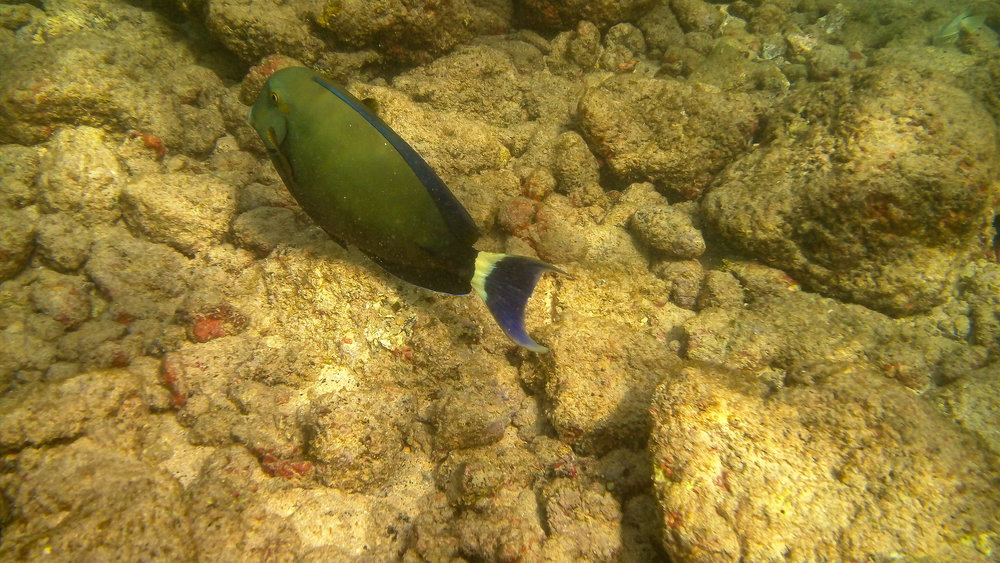 Kauai Snorkeling-17.jpg