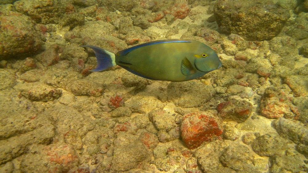 Kauai Snorkeling-20.jpg
