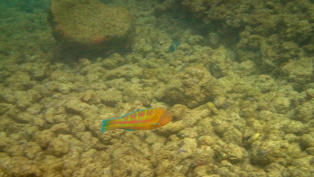 Kauai Snorkeling-23.jpg
