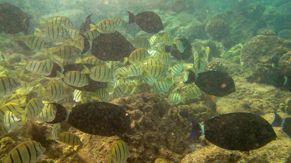 Kauai Snorkeling-22.jpg
