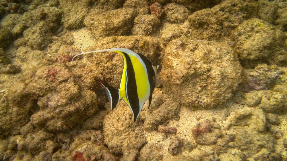 Kauai Snorkeling-24.jpg