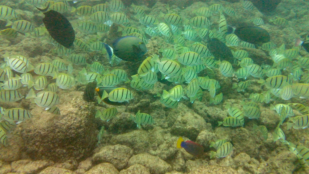 Kauai Snorkeling-30.jpg