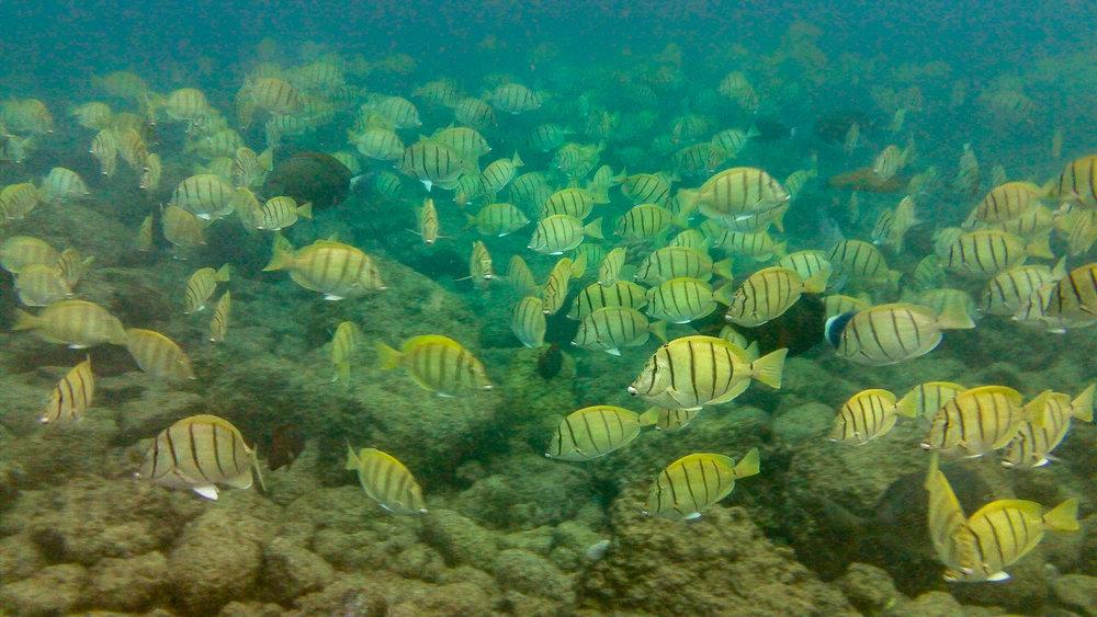 Kauai Snorkeling-31.jpg