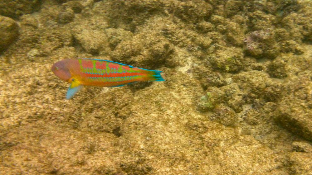 Kauai Snorkeling-37.jpg