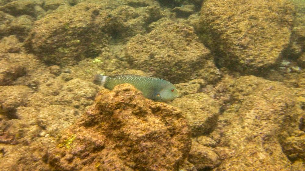 Kauai Snorkeling-38.jpg